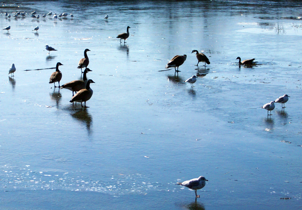 Nanaquaket Pond tiverton rhode island