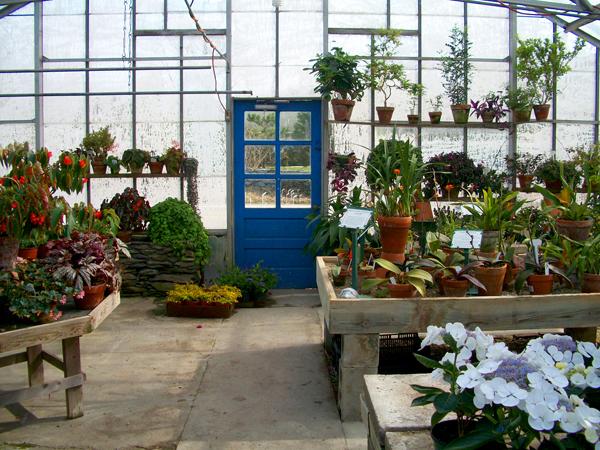 peckham's greenhouse